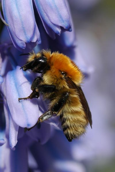 How Common Crop Pesticide Harms Bees (1 of 3)