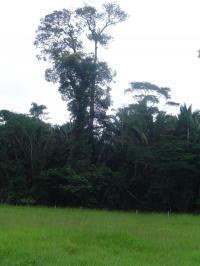 Pasture and Rainforest