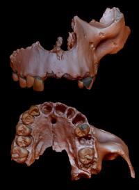 Digital reconstruction of Homo antecessor specimen