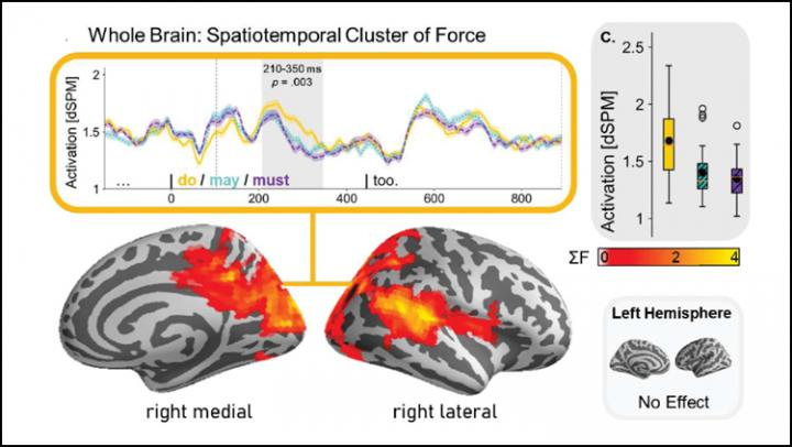 How the Brain Distinguishes Fact from Possibility