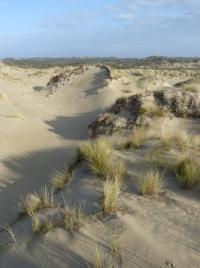 Belgian Coastal Dunes