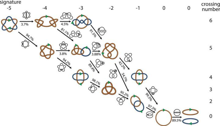 Unraveling a Knotty Problem in DNA