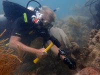 Rüdiger Bieler Diving