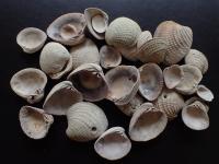 Shells Provide Deep-Time Look at Marine Habitats