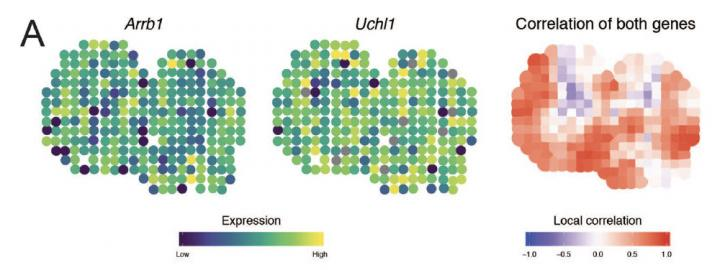 Mapping Correlation between Genes within a Mouse Olfactory Bulb