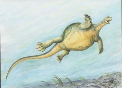 Fossil Turtle Illustration