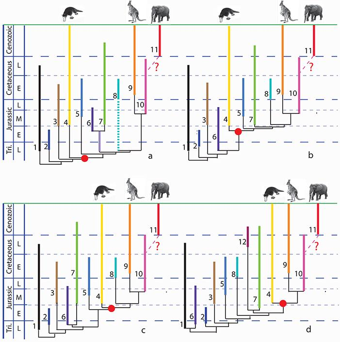 Phylogenic Hypotheses Chart