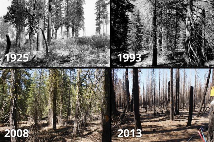fire through years