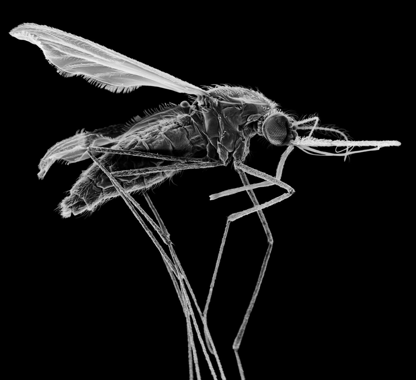 Gene Drives Work Faster Than Non-Drive Approaches to Control Problem Insects