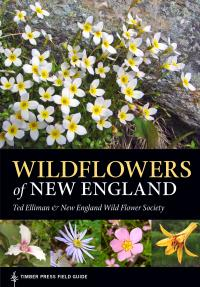 Wildflowers of New England Cover Photo
