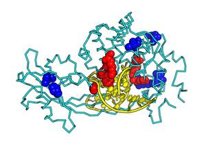 MUTYH-associated polyposis mutations