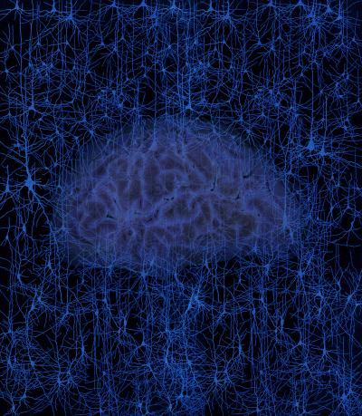 Towards an in Situ Model of the Human Brain