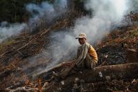 Deforestation in the Mekong