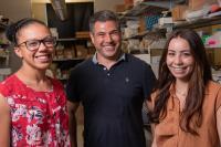 Rice University Bioengineers Amanda Nash, Omid Veiseh and Samira Aghlara-Fotovat