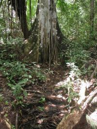 Researchers Reveal How Microbes Cope in Phosphorus-Deficient Tropical Soil