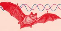 Bat Echoes