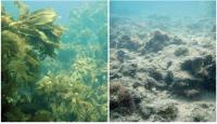 Lost Kelp Forests