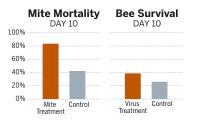 Mite Mortality and Bee Survival