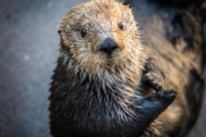 Gidget / Monterey Bay Aquarium
