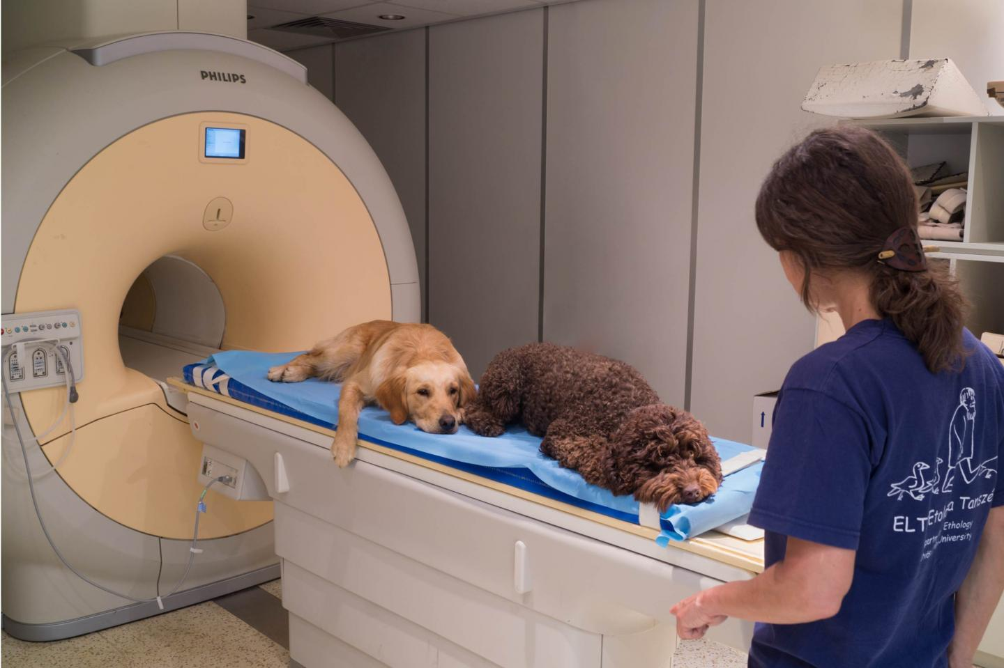 Dogs Understand Both Vocabulary and Intonation of Human Speech (3 of 3)