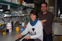 Elena Álvarez-Marimon and Albert Rosell, Institute for Research in Biomedicine