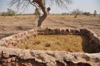 Landscape restoration approaches in Burkina Faso (2)