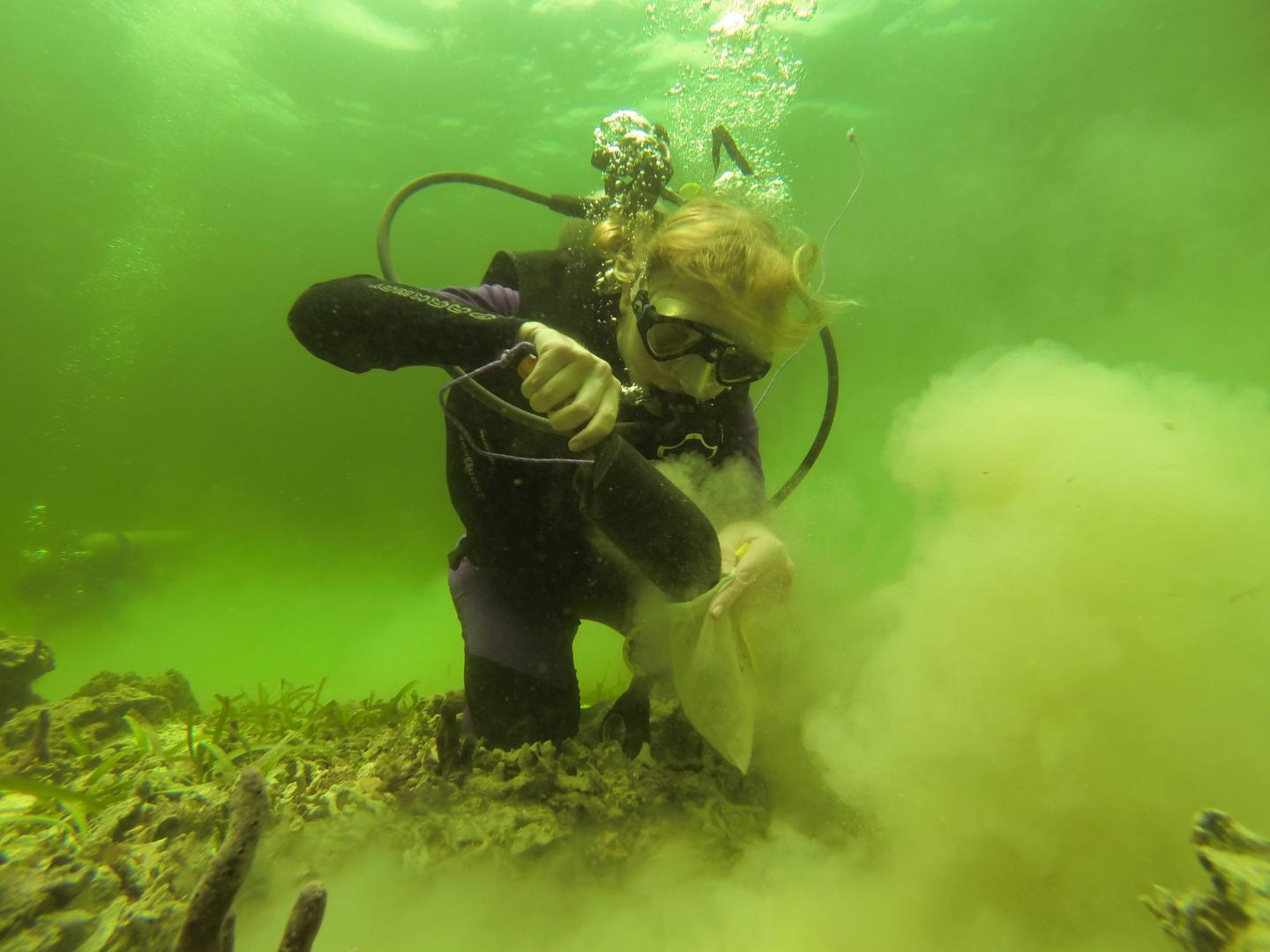 Researcher collecting bulk surface sediment samples