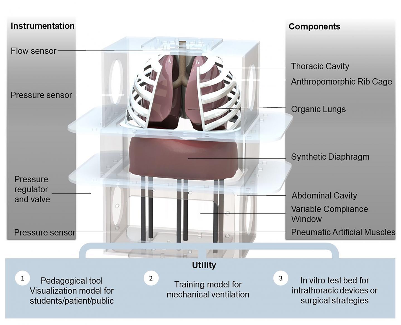 Computational Rendering of the Biohybrid Respiratory Simulator
