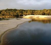 Negro River Tributary