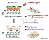 NSD2 Shapes the Program of Cell Senescence