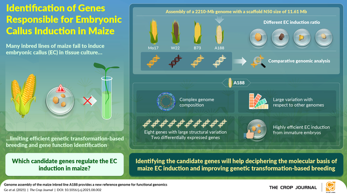 Genome assembly of the maize