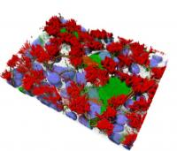 A 3D representation of human airway cell cultures that mimic the complexity of the cells found in the respiratory tract.