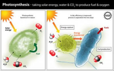 Illustration Showing Differences Between Natural and In-lab Photosynthetic Process