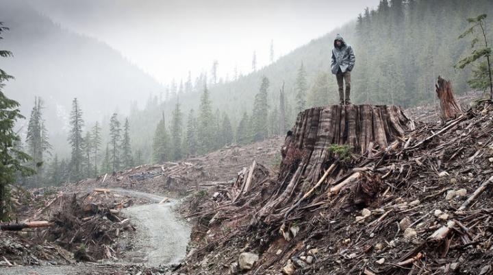 Canadian wilderness destruction