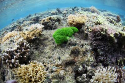 Killer Seaweed