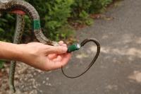 Rat snake gps