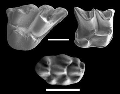 Holotypes