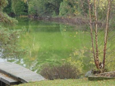 Algal Bloom in a Lake near Parry Sound, Ontario
