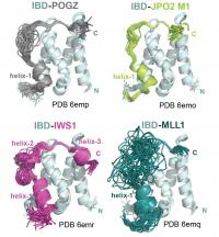 Solution Structures of the LEDGF/p75 Domain