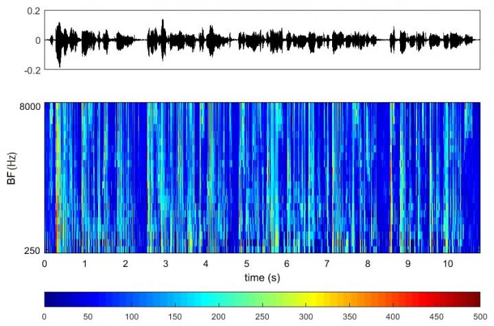 Speech Signal and its Transformation into the Reaction of the Auditory Nerve
