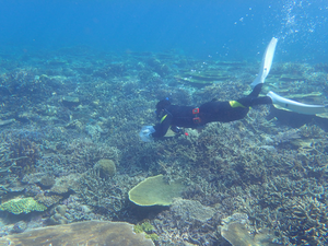 Collecting seawater around corals