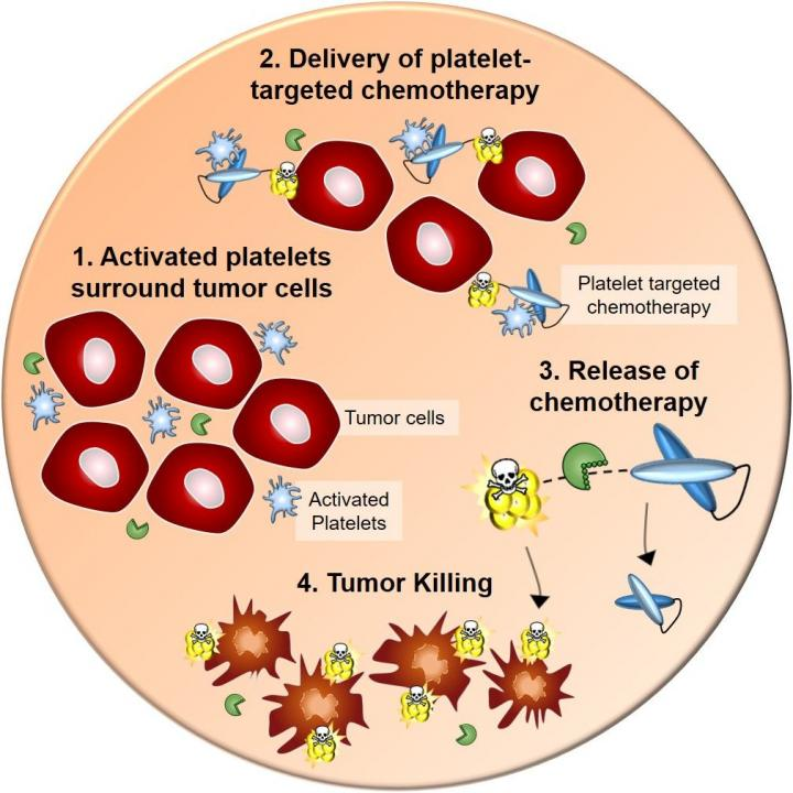 Activated Platelets