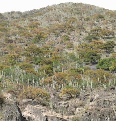 Dry forest, Mantaro Valley, Peruvian Andes