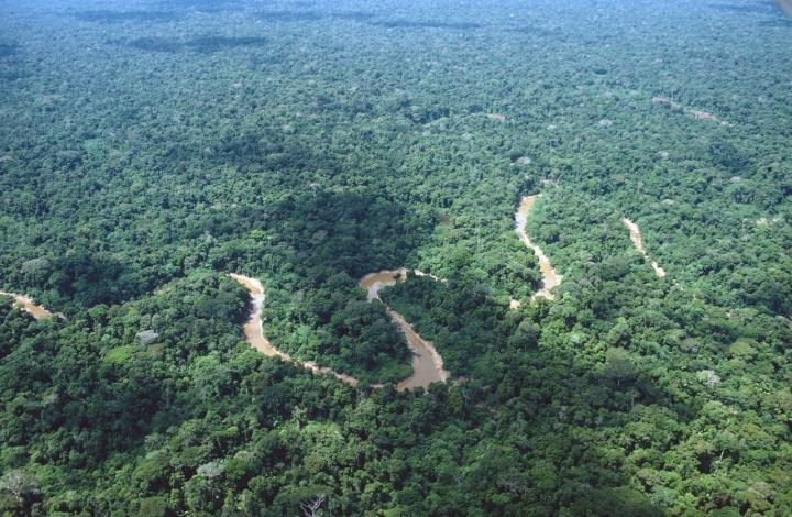 The Rainforests in Lowland Peruvian Amazonia Have a Relatively Uniform Appearance Over Large Areas