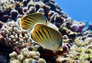Large Fish Hold Delicate Reef Food Webs in Balance
