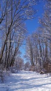 Dartmouth Forest Reflectivity Study