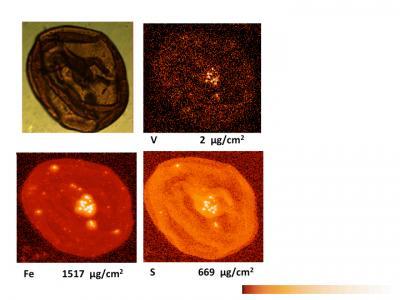 Scanning for Vanadium