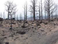 Barren Burn Area