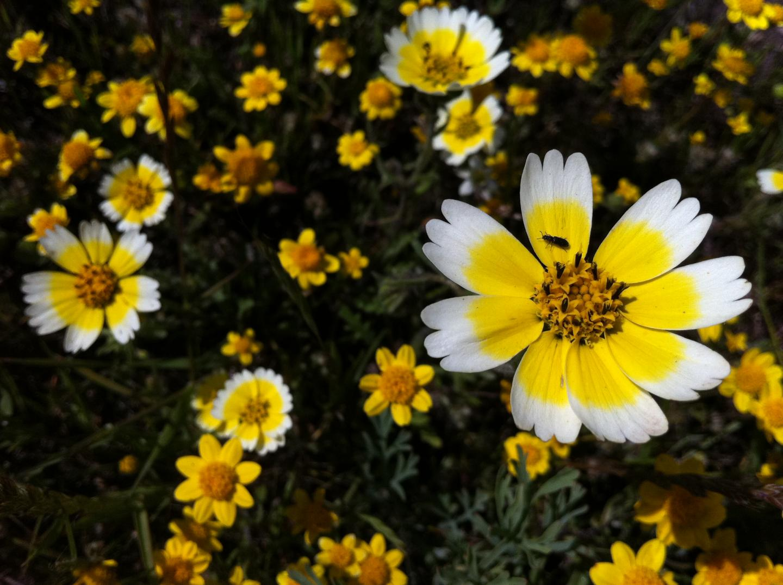 Flowers in a California Grassland