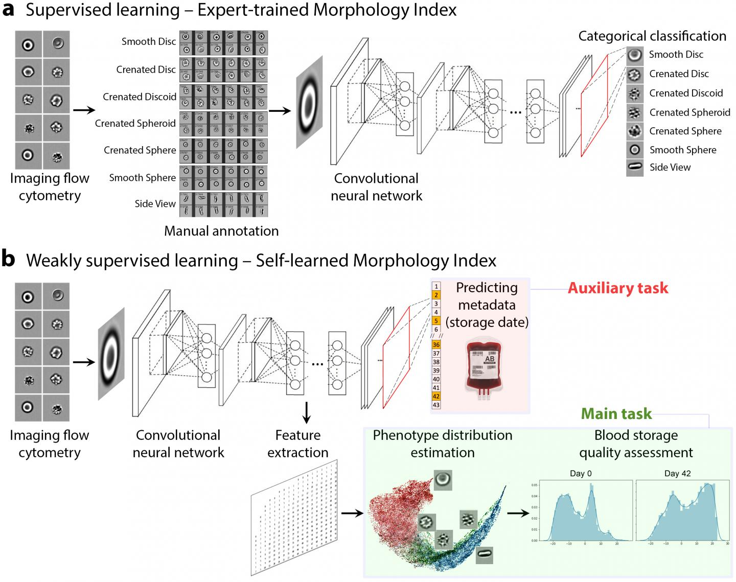 Deep Learning Models for Assessing Red Blood Cell Quality